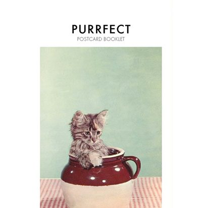 purrfect1 copy