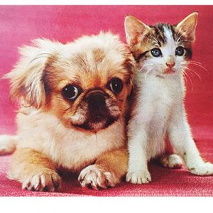 Cat-&-Dog-Pink_web