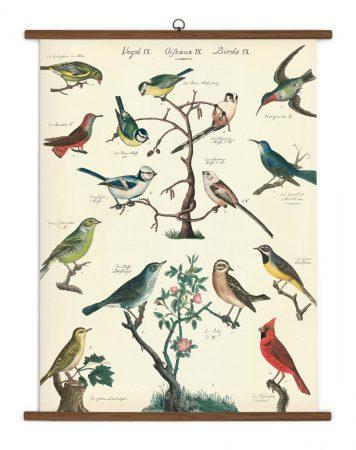 Bird Species Vintage School Chart