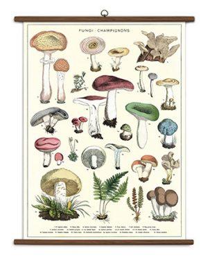 Mushroom School Chart