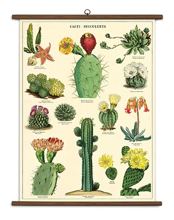 Cacti and Succulents School Chart